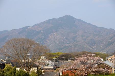 桜の賀茂川と比叡山