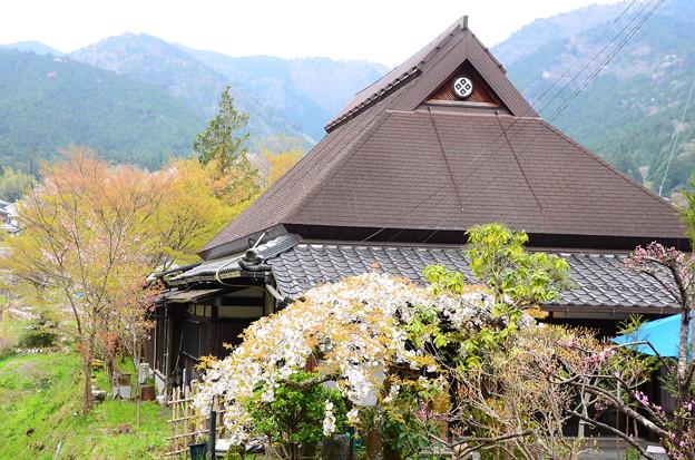 大原の桜風景