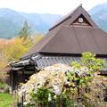 Photos: 大原の桜風景