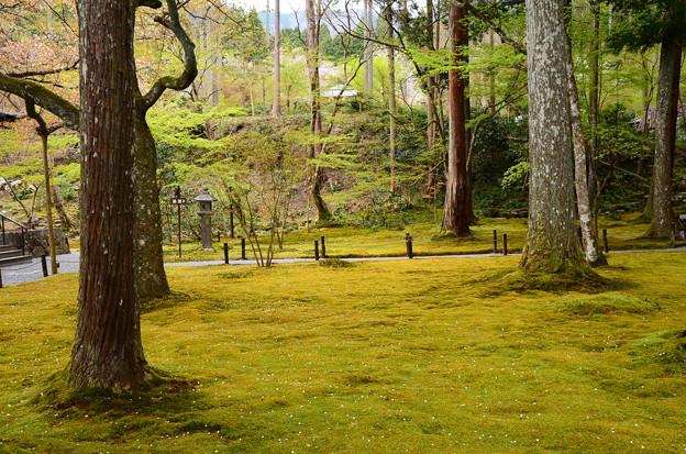 苔の上の花筏
