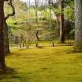 Photos: 苔の上の花筏