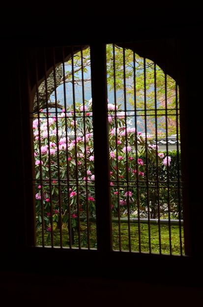 窓越しの石楠花