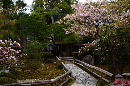 桜咲く宝泉院