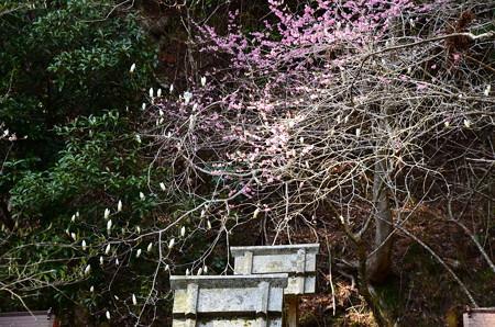 梅の残る西塔