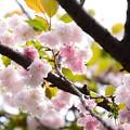 写真: 作並山(サクナミヤマ)