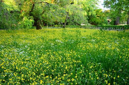 黄と緑の近衛邸跡