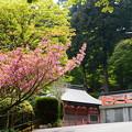東塔前の関山