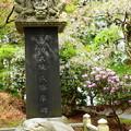石碑と桜、石楠花