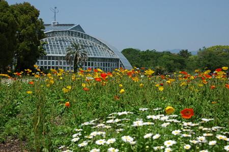初夏の京都府立植物園