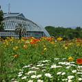 写真: 初夏の京都府立植物園