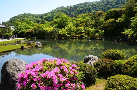 躑躅咲く曹源池