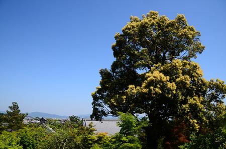 望京の丘の大木