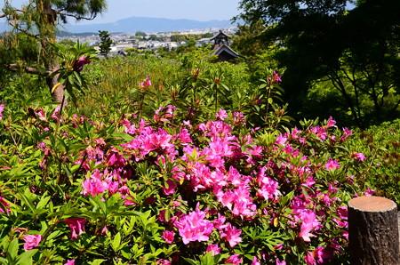 望京の丘の躑躅