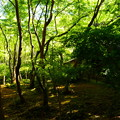 Photos: 新緑の祇王寺