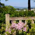 写真: 花車(ハナグルマ)と比叡山