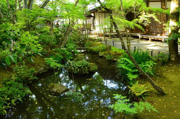 新緑の中の池