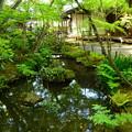 写真: 新緑の中の池