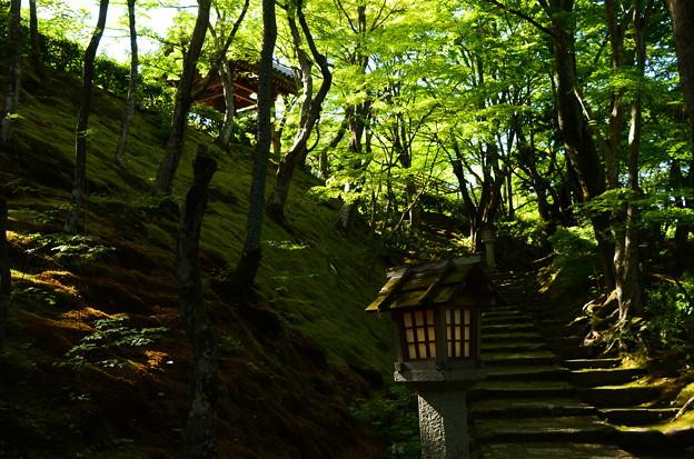 緑の常寂光寺