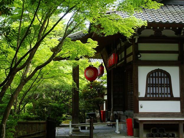 新緑の赤山禅院