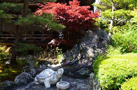 神使の庭の亀と鯉
