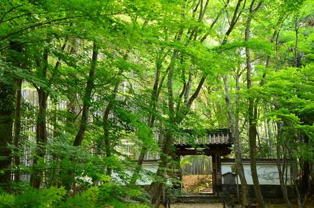 緑の中の総門