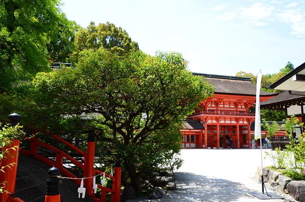 初夏の下鴨神社