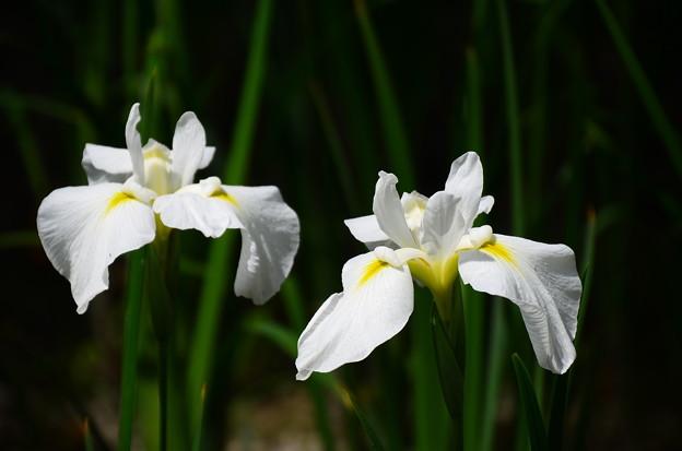 写真: 春の海(ハルノウミ)