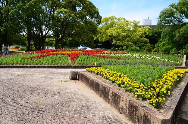 初夏の花々