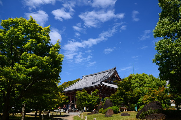 写真: 初夏の青空