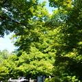 緑の養源院