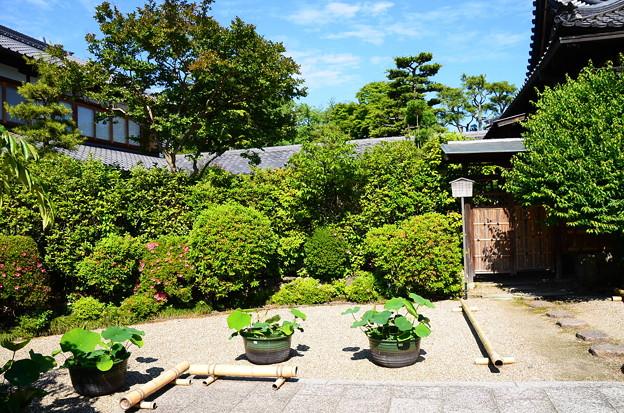 鉢蓮の並ぶ法住寺