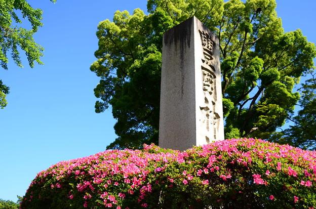豊国神社の皐月