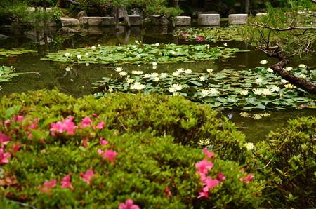 皐月と睡蓮の蒼龍池