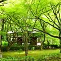 写真: 新緑の真如堂