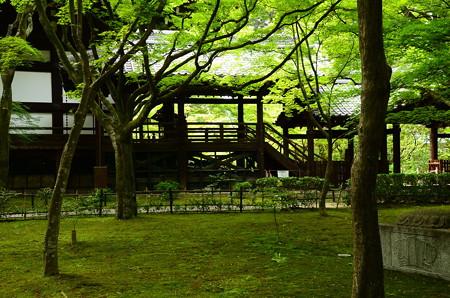 本堂裏の緑