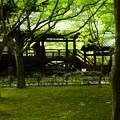 写真: 本堂裏の緑