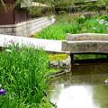 写真: 野村碧雲荘の花菖蒲