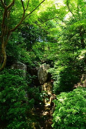 緑に包まれる青女の滝