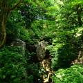 写真: 緑に包まれる青女の滝