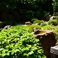 写真: 元信の庭
