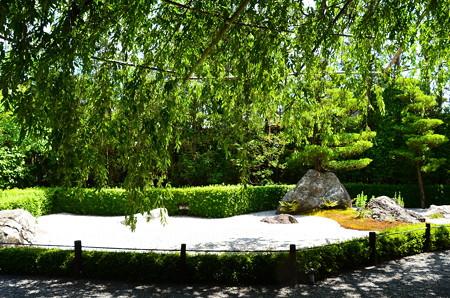 葉桜の陽の庭