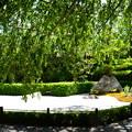 写真: 葉桜の陽の庭