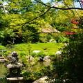 写真: 春もみじの余香苑