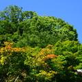 写真: 五月晴れの空に