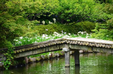 橋と花菖蒲
