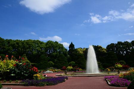 夏の日の府立植物園