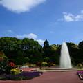 写真: 夏の日の府立植物園