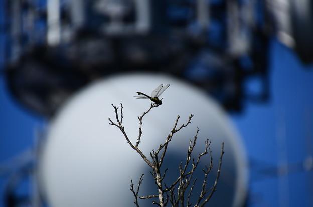 Photos: 月に蜻蛉~!?