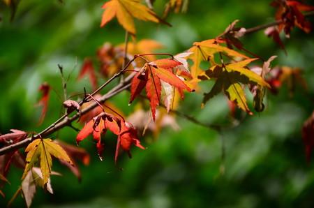 夏の盛りは秋の入口