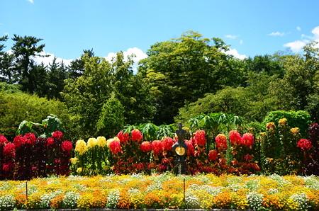 真夏の府立植物園